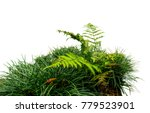 Fern and grass isolated on white background - stock photo
