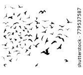 seagulls black silhouette on... | Shutterstock . vector #779537587