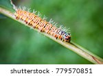 a large colorful caterpillar... | Shutterstock . vector #779570851