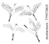 bird crane illustrations....   Shutterstock . vector #779573815