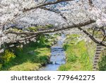 cherry blossom tree branches in ... | Shutterstock . vector #779642275