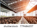 mushroom cultivation growing in ... | Shutterstock . vector #779686357