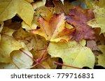 fallen leaves of maple. golden... | Shutterstock . vector #779716831