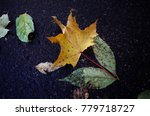 fallen leaf of maple on the... | Shutterstock . vector #779718727