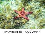 red starfish in seaweed of... | Shutterstock . vector #779860444