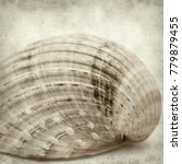 Small photo of textured old paper background with rough cockle, Acanthocardia tuberculata, empty shell
