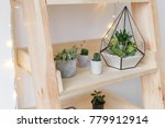 geometric glass florarium vase...   Shutterstock . vector #779912914