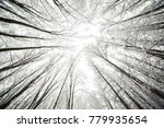 winter forest before christmas | Shutterstock . vector #779935654