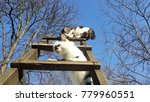 Two Cats Playing On A Ladder In ...