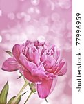peony and bokeh | Shutterstock . vector #77996959