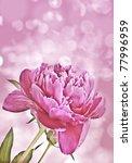 peony and bokeh | Shutterstock . vector #77996959