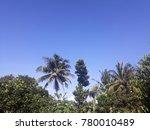 tree blue sky village | Shutterstock . vector #780010489