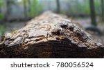 fallen trunk close up | Shutterstock . vector #780056524