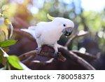 sulphur crested cockatoo | Shutterstock . vector #780058375