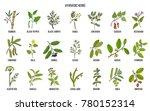 ayurvedic herbs  natural... | Shutterstock .eps vector #780152314