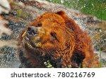 grizzly bear splash. a hit... | Shutterstock . vector #780216769