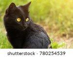 beautiful bombay black cat... | Shutterstock . vector #780254539