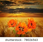 Field With Poppies And Sunset