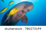 dugong ascending to the surface   Shutterstock . vector #780273199