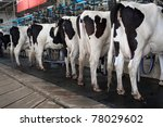 Cow milking facility - stock photo
