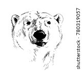 hand sketch head of polar bear. ... | Shutterstock .eps vector #780319057