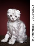 Stock photo white kitten portrait 780343825