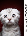 Stock photo white kitten portrait 780343831