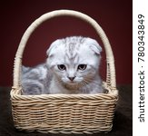 Stock photo white kitten portrait 780343849