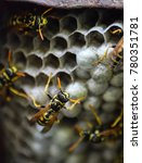 wasp nest with wasps sitting on ... | Shutterstock . vector #780351781