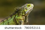 iguana in aruba | Shutterstock . vector #780352111