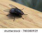 insect fly macrophotography | Shutterstock . vector #780380929