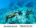 Sea Turtle  Oahu Hawaii