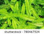 Green Native Fern Or...