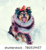 portrait of a dog entangled in...   Shutterstock . vector #780519457
