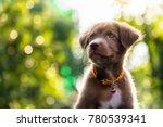 happy adorable brown labrador... | Shutterstock . vector #780539341