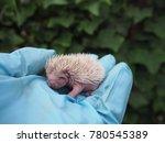 Porcupine Hedgehog Lovely ...
