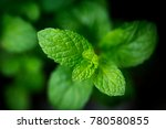 mint leaves. peppermint of mint ... | Shutterstock . vector #780580855