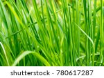 outdoor scenery showing some...   Shutterstock . vector #780617287