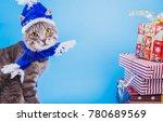 Grey Tabby Cat Wearing Blue Ne...
