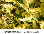 bee on a bush | Shutterstock . vector #780730621