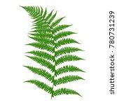 fern. an image of a green fern...   Shutterstock .eps vector #780731239