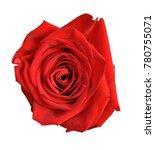 red rose isolate on white... | Shutterstock . vector #780755071
