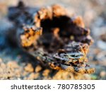 old dead branch in the middle... | Shutterstock . vector #780785305