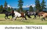 galloping horses and three...   Shutterstock . vector #780792631