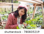 young asian girl in strawberry...   Shutterstock . vector #780835219