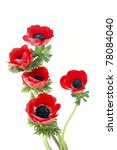 Red Flowers Of Anemone On A...