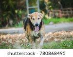 big dog running with feeling... | Shutterstock . vector #780868495