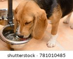 Dog Drinking Water From A Meta...