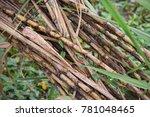 sugarcane  sugar cane   ... | Shutterstock . vector #781048465