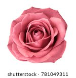 pinkose on a white isolated... | Shutterstock . vector #781049311